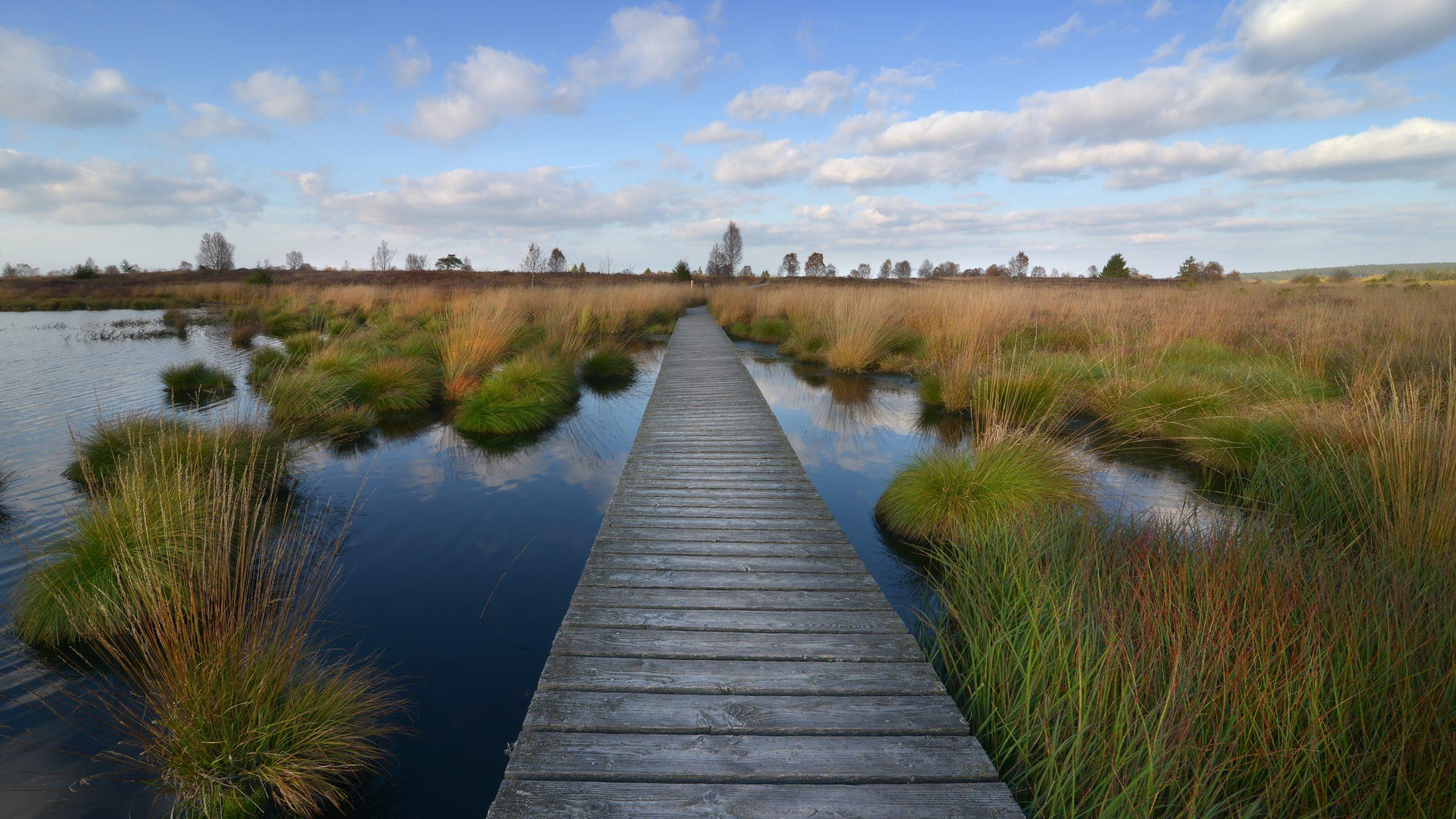 What are peatlands? - International Peatland Society