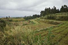 Sphagnum & rice terraces
