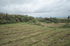 Sphagnum terrace on top, rice terrace below
