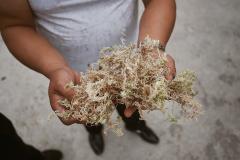 Dried Sphagnum